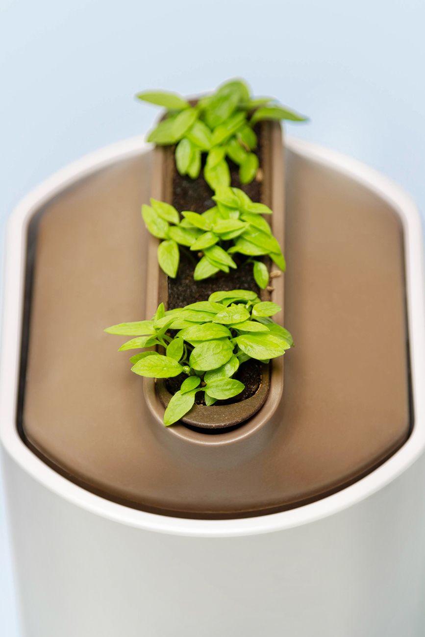 Faire Pousser Du Persil En Appartement kit de rempotage | jardinage de légumes d'intérieur, potager