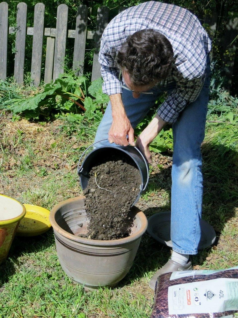 Planter Des Tomates En Pot ma culture de tomates en pots | culture tomate, jardinage en