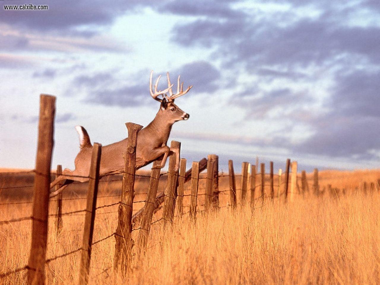 Deer Hunting Wallpapers For Computer Wallpaper 1920×1200