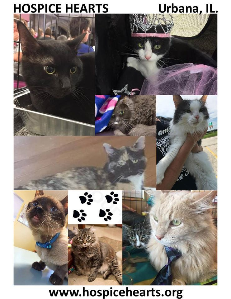 National Cat Day 10/29/16 National cat day, Pet search, Cats
