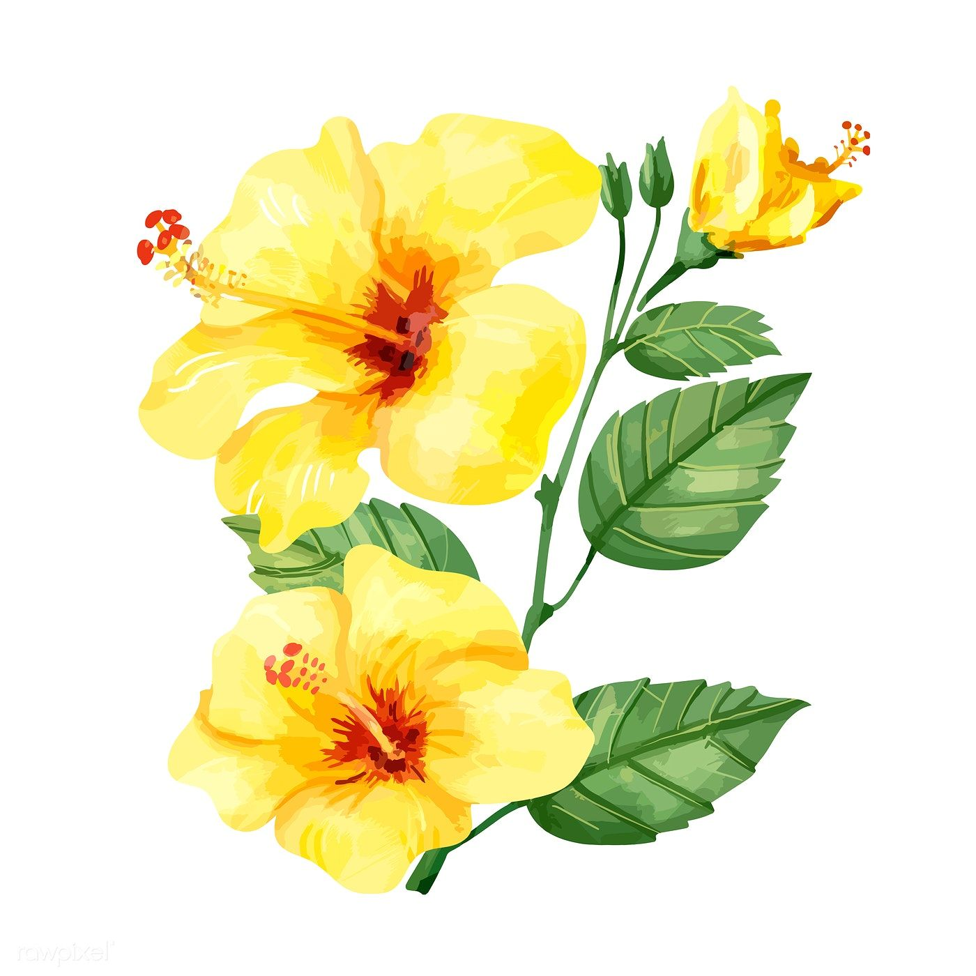 Download Premium Vector Of Hand Drawn Yellow Hibiscus Flower 421512 Hibiscus Flower Drawing Yellow Flowers Painting Yellow Hibiscus