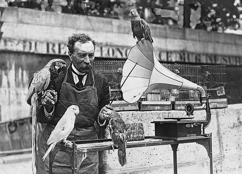 A parrot seller in Germany trains his birds to talk by playing them gramophone records c.1935