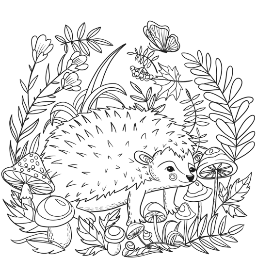 Realistic Hedgehog Coloring Picture Hedgehog Colors Animal Coloring Pages Coloring Pictures