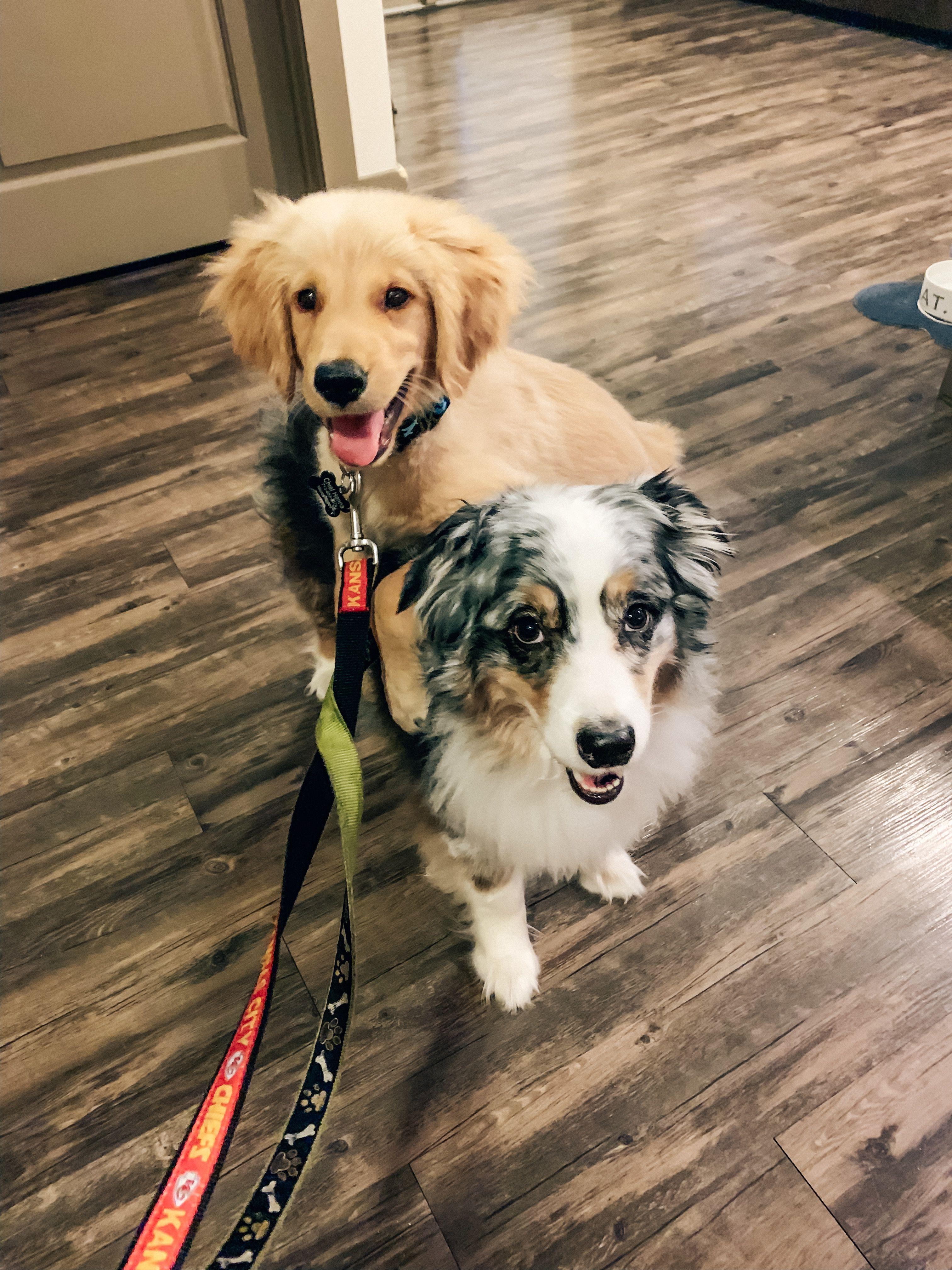 Sweetest Puppies Puppies Animals Golden Retriever
