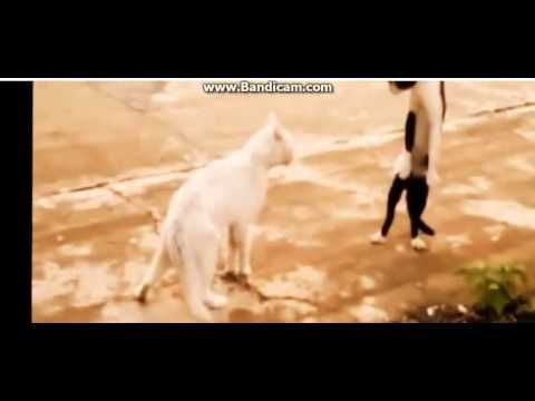 FUNNY CAT COMPILATION - BIGGEST VIDEO of Funny Kitty Cat Fails part5 - http://positivelifemagazine.com/funny-cat-compilation-biggest-video-of-funny-kitty-cat-fails-part5-2/ http://img.youtube.com/vi/Y0FPy4tVBPQ/0.jpg                                             Funny Animal Videos for Kids Cute Kitten Compilation Funny Cat Videos Youtube Funny Animal Videos Keywords: youtube funny animal videos, funny videos of …    source                                   Plea