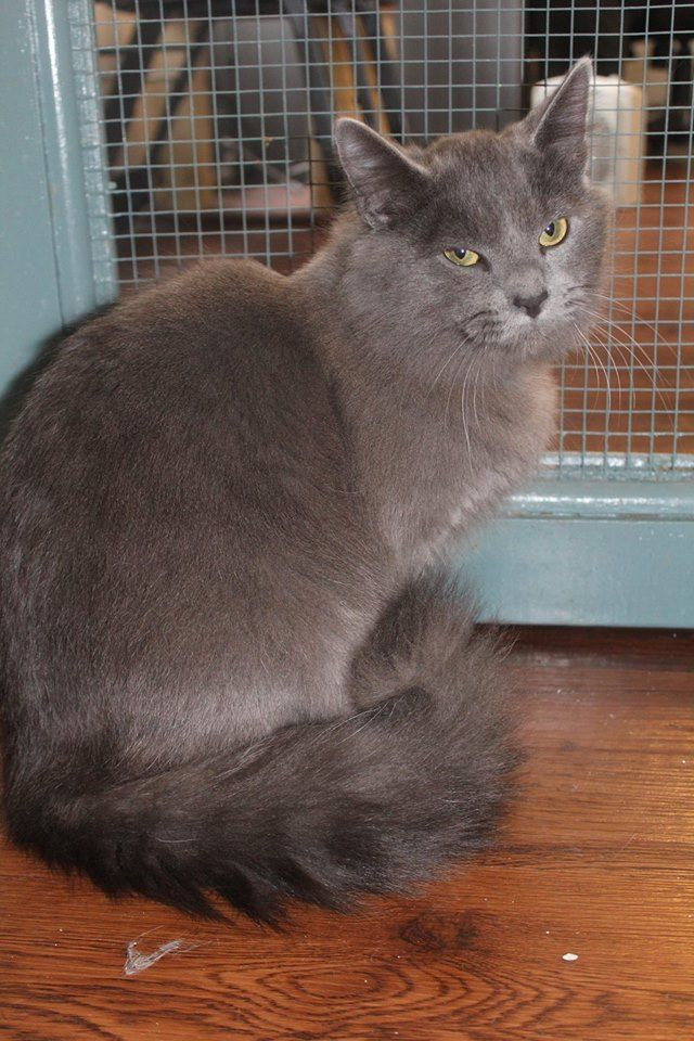Check Out The Faces Of Arf S Catty Shack Right Meow These Are Just A Few Of The Gorgeous Kitties Available Fo Cat Adoption Flea Treatment Right Meow