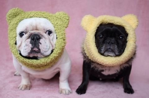 Crochet Dog Hat Pattern Ideas Best Collection Ear Warmers Crochet