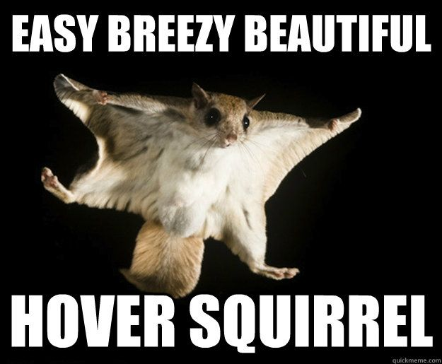 Easy Breezy Beautiful Hover Squirrel The Surreal