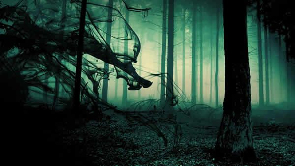 Something In The Woods Forest Fog Dark Tree Wallpaper Backgrounds Dark Horror background hd images for