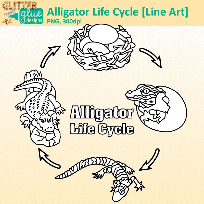 Alligator Life Cycle Clipart Digi Stamps