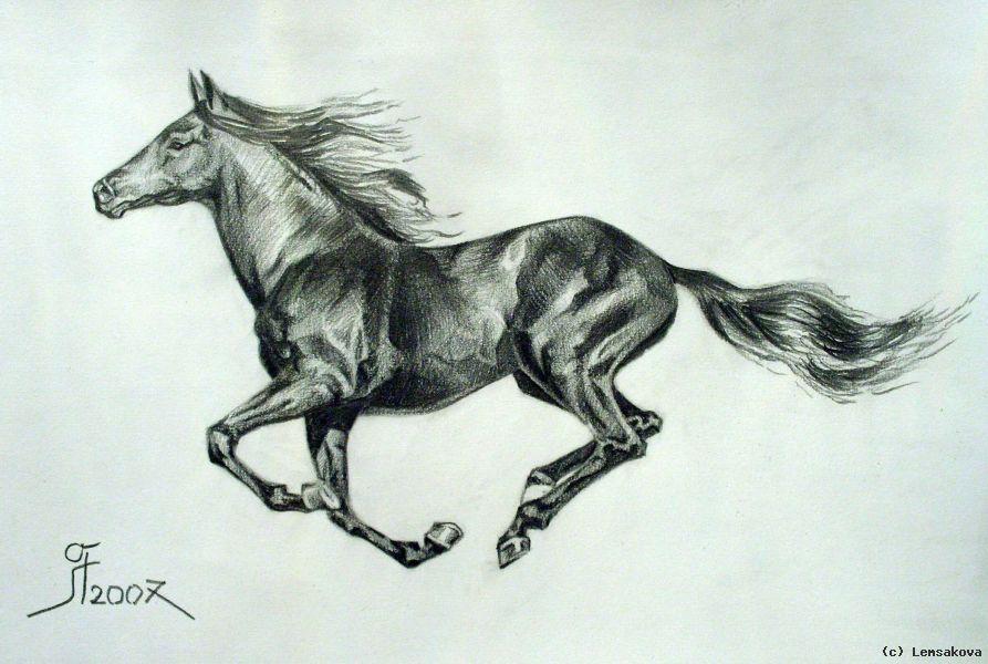 Pferd Zeichnung Bleistift Pinturas Caballos Pferde