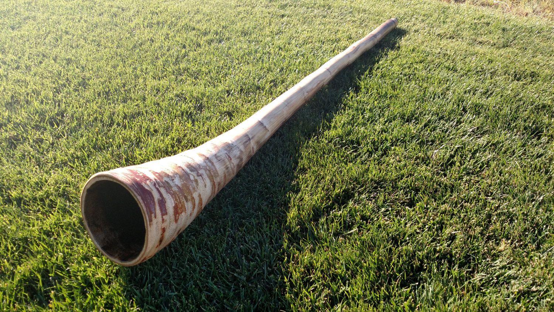 Agave Didgeridoo Bubinga, Didgeridoo, How are you feeling