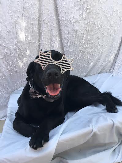 Happy pup! Love the sunglasses!