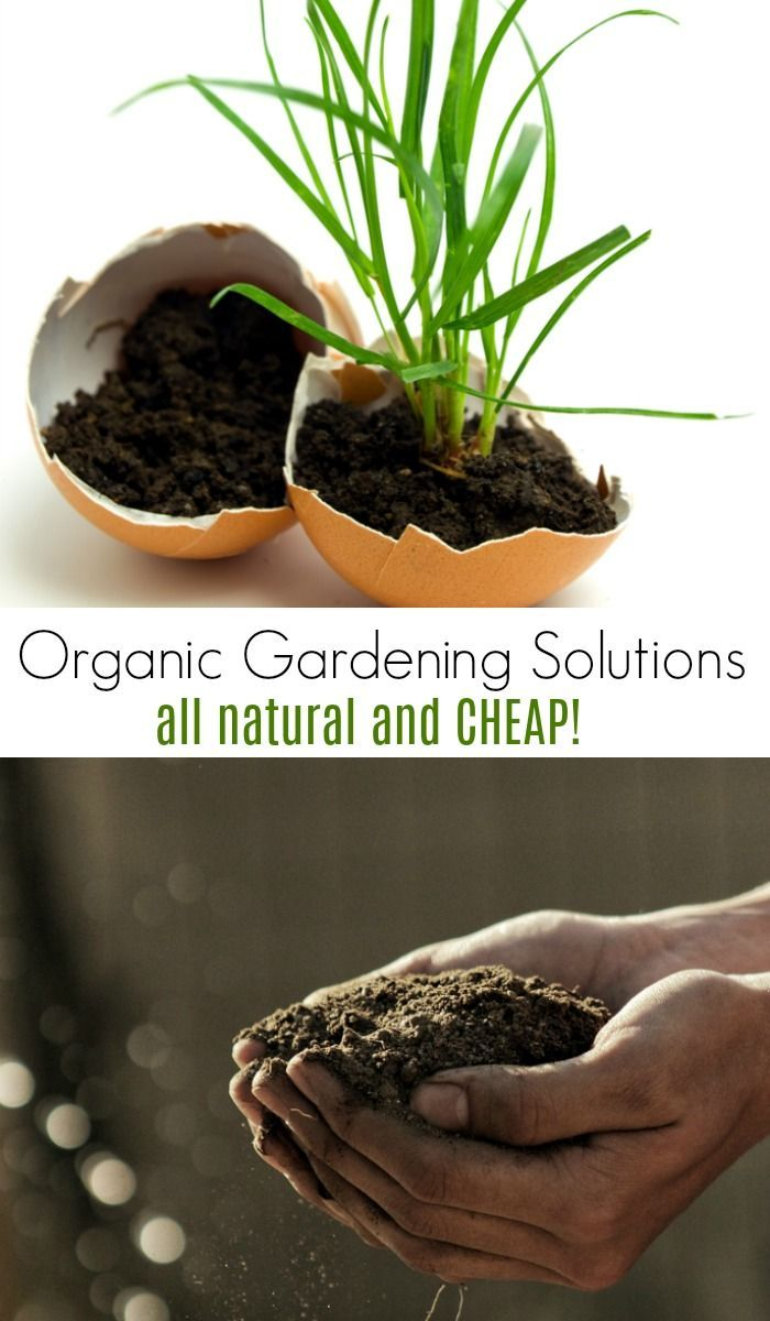 Blog Jardinage Débutant These Cheap Organic Gardening Solutions Are Perfect For Frugal