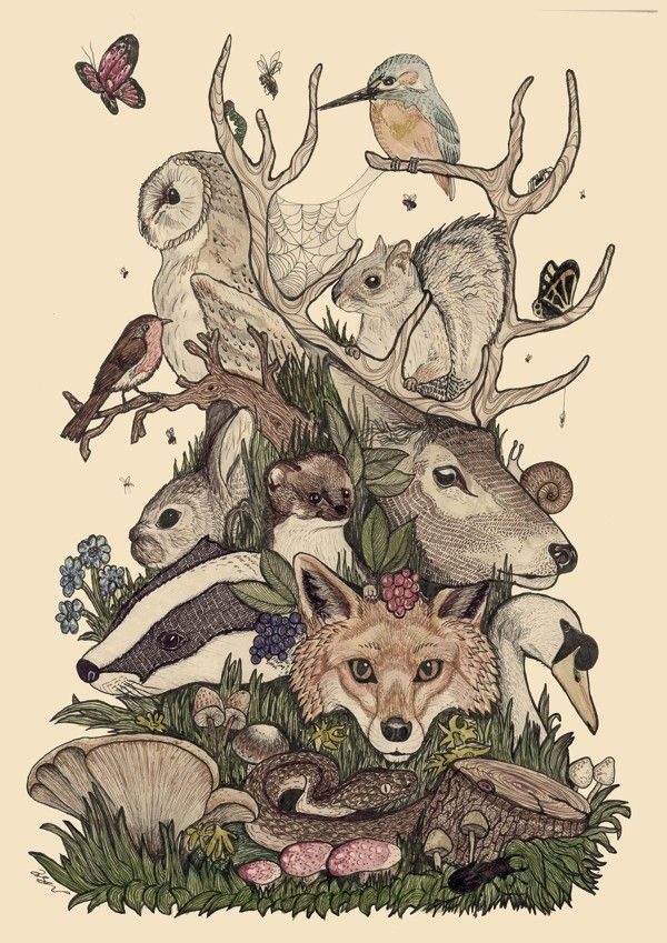 Woodland Folk By Callum Bishop Ilustraciones De Animales