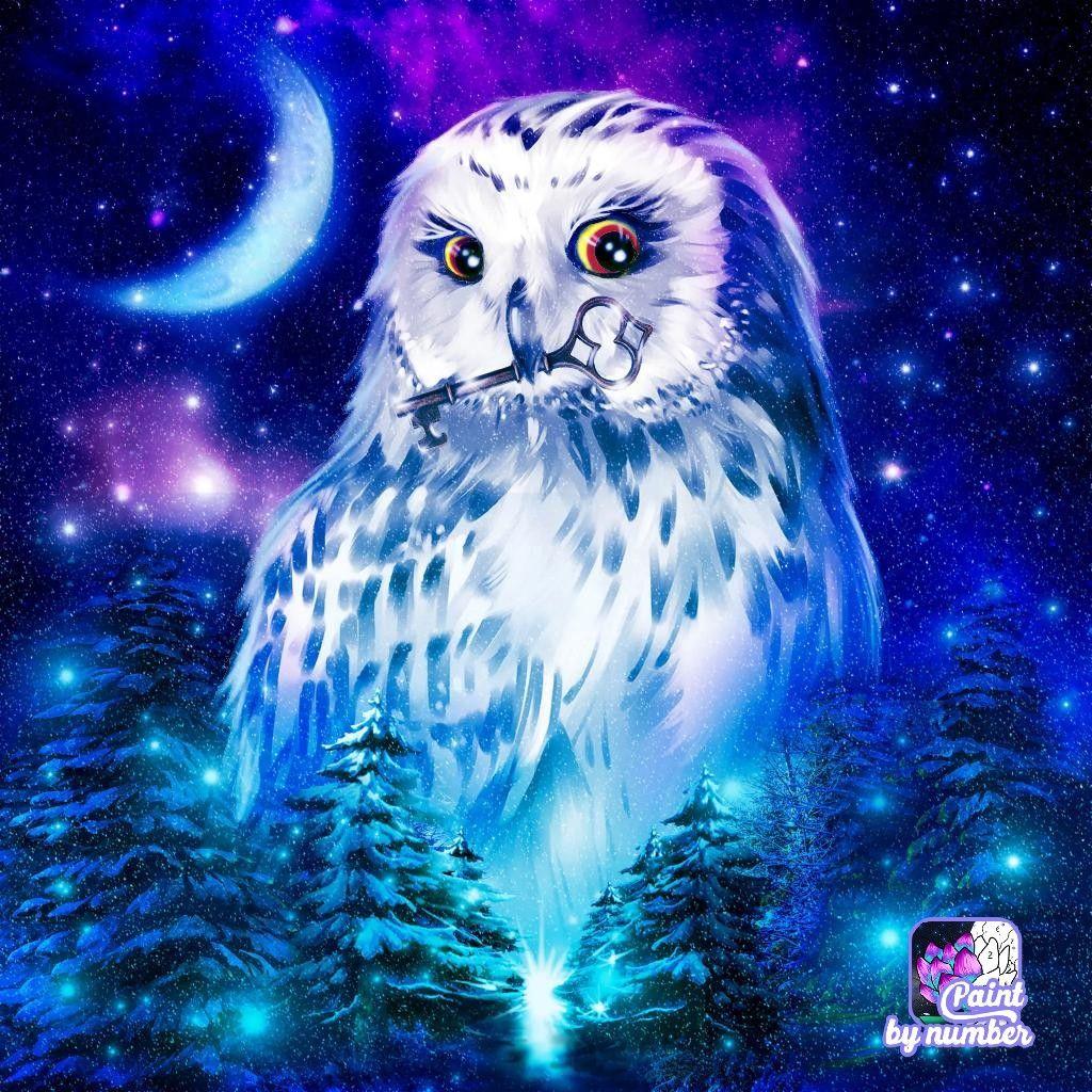 pincornelia jerzyk on zigaretten  owl pictures cute
