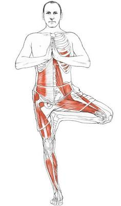 exercise anatomy vrikshasana tree pose benefits