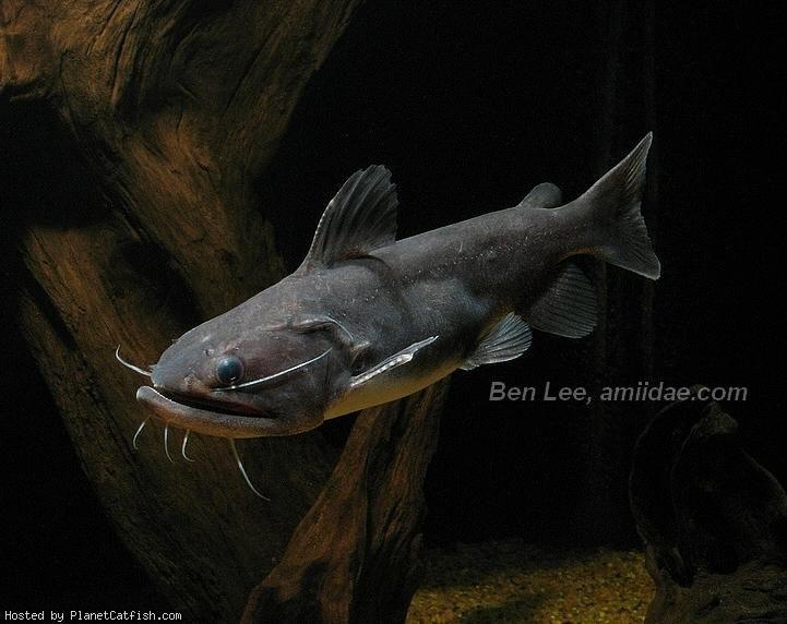 Pin on Freshwater Aquarium