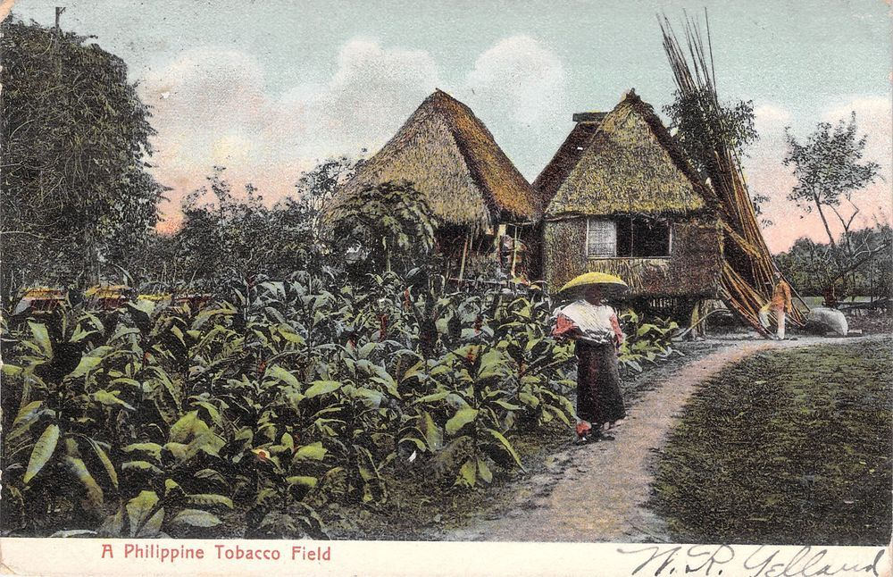 An Old Woman in a Philippine Tobacco Field. 1908