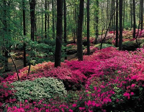 17 Best 1000 images about Great place to visit Callaway gardens on
