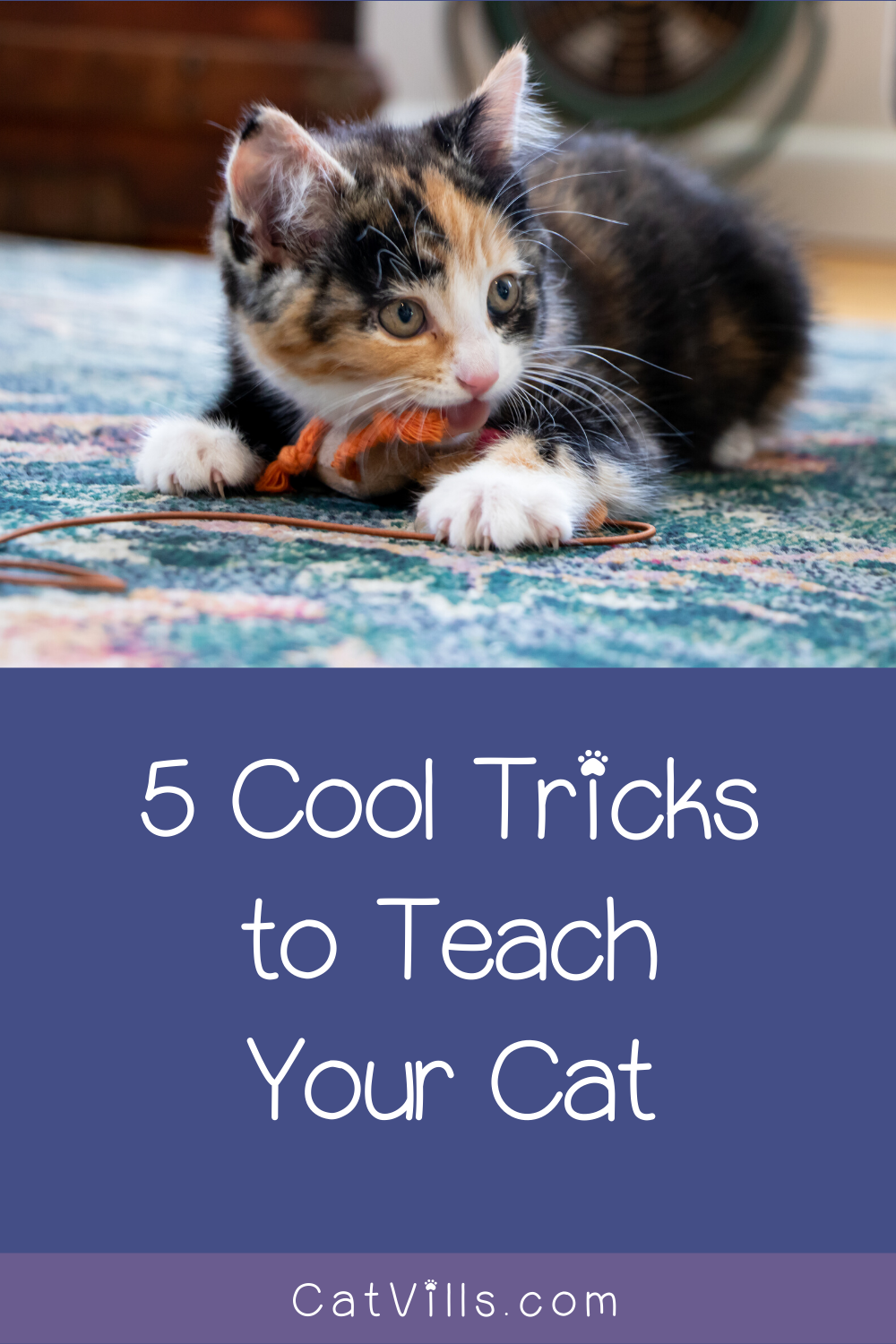 5 Incredibly Impressive Tricks To Teach Your Cat Catvills In 2020 Cat Training Dog Training Cat Hacks