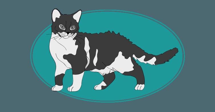 L'American-Wirehair existe depuis les années 1960 et doit son origine aux Etats-Unis. Il est le fruit de plusieurs croisements avec un American Shorthair. Il est sociable, athlétique et curieux. son espérance de vie est de 15 ans en moyenne. #chat #cat #americanwirehair. Pour plus d'informations, rendez-vous sur http://www.assuropoil.fr/races-de-chats