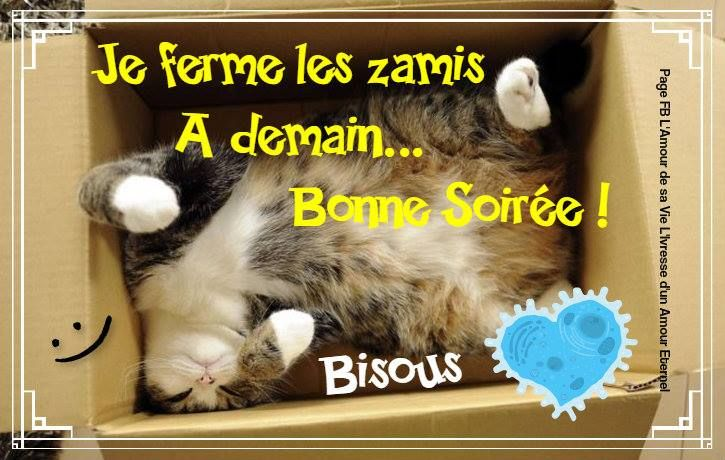 """Résultat de recherche d'images pour """"images bonne soirée chats bisous"""""""