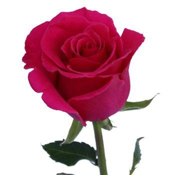 Pin On Dark Pink Wedding Flowers