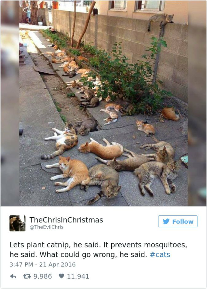 The Funniest Tweets About Cats In - The 27 funniest tweets about cats in 2016