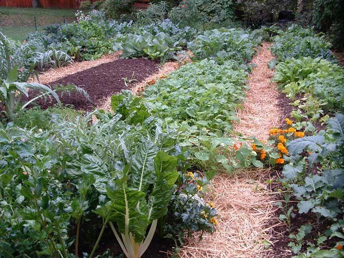 Fall Gardens | ... Makeovers for Awesome Fall Vegetable Gardens — Veggie Gardening Tips