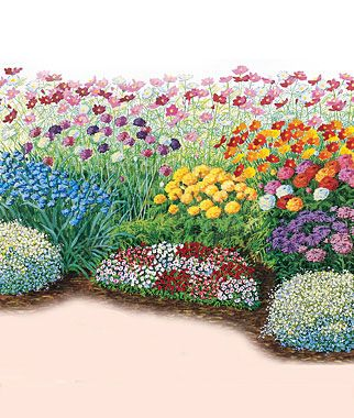 Cutting Garden Design Plans burpee designed cutting garden: aster, baby's breath, cornflower