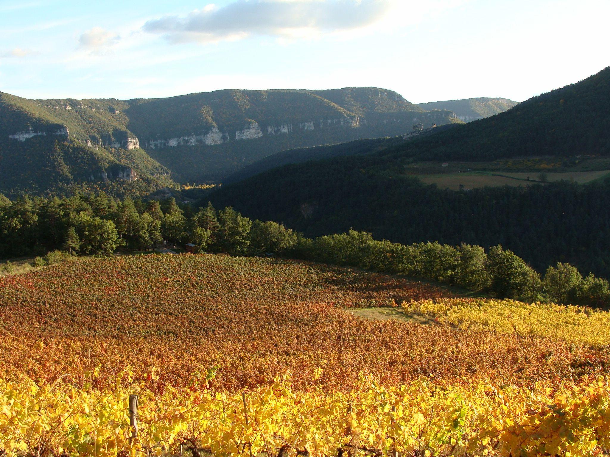 L'automne à La Cachette - Au bout des vignes, notre roulotte