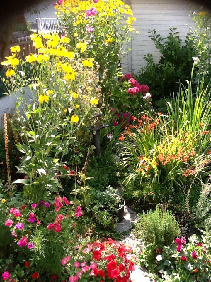 Mes flours de mon jardin