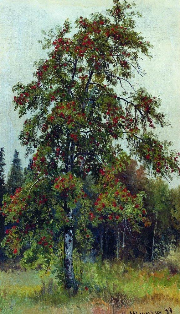 Rowan, 1892 by Ivan Shishkin (Russian 1832-1898)