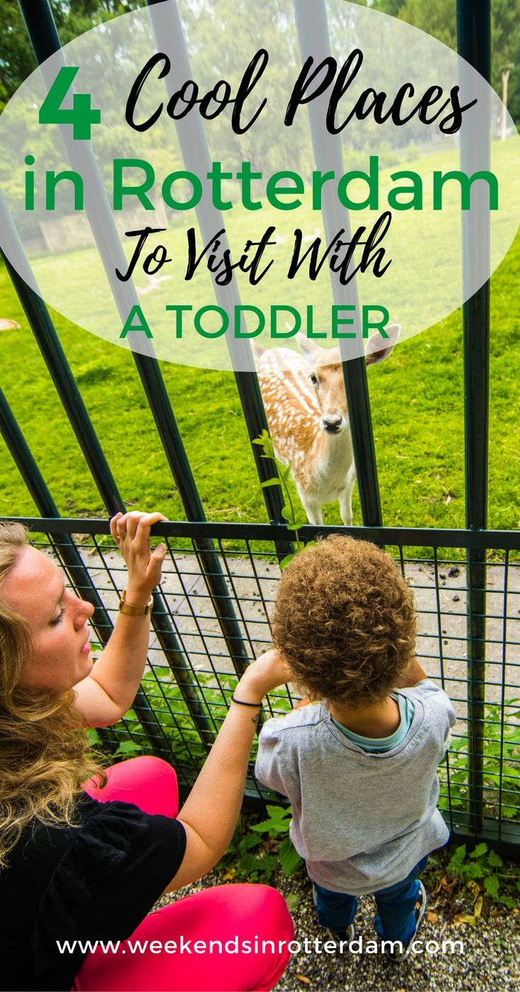 4 Cool Places In Rotterdam To Visit With A Toddler