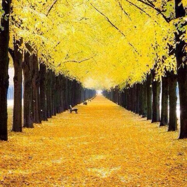 Autumn in Hanover,Germany