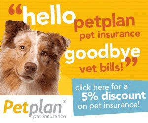 New Best Friend Is Here Pet Insurance Reviews Pet Insurance