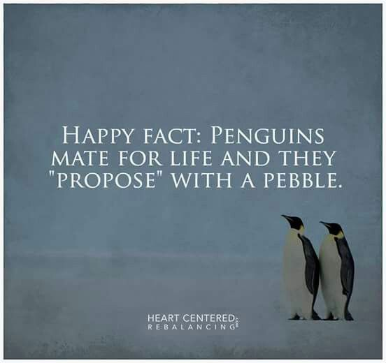 Penguin Love Quotes Simple That's Love Amimals Pinterest Penguins And Animal