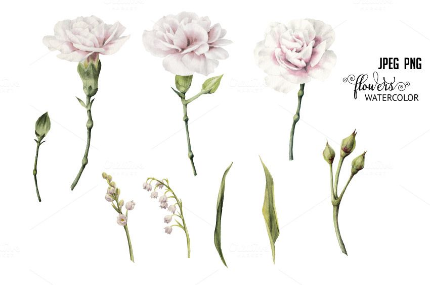 Set of isolated White flowers by ollalya on @creativemarket