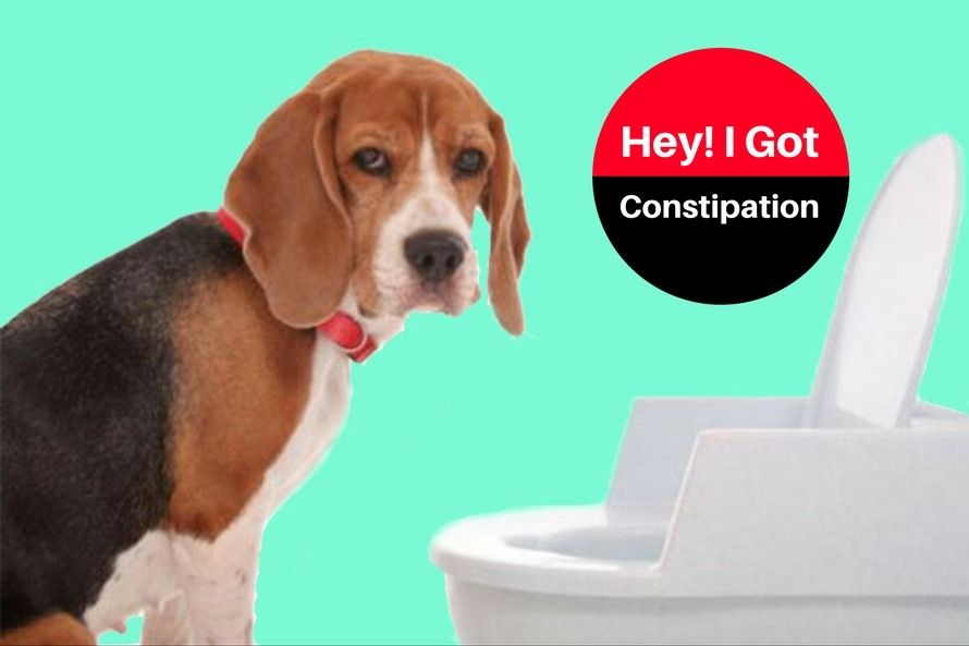 Pin On Dog Home Remedies