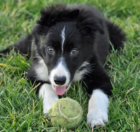 Jetson The Border Collie Games And Then Some Border Collie