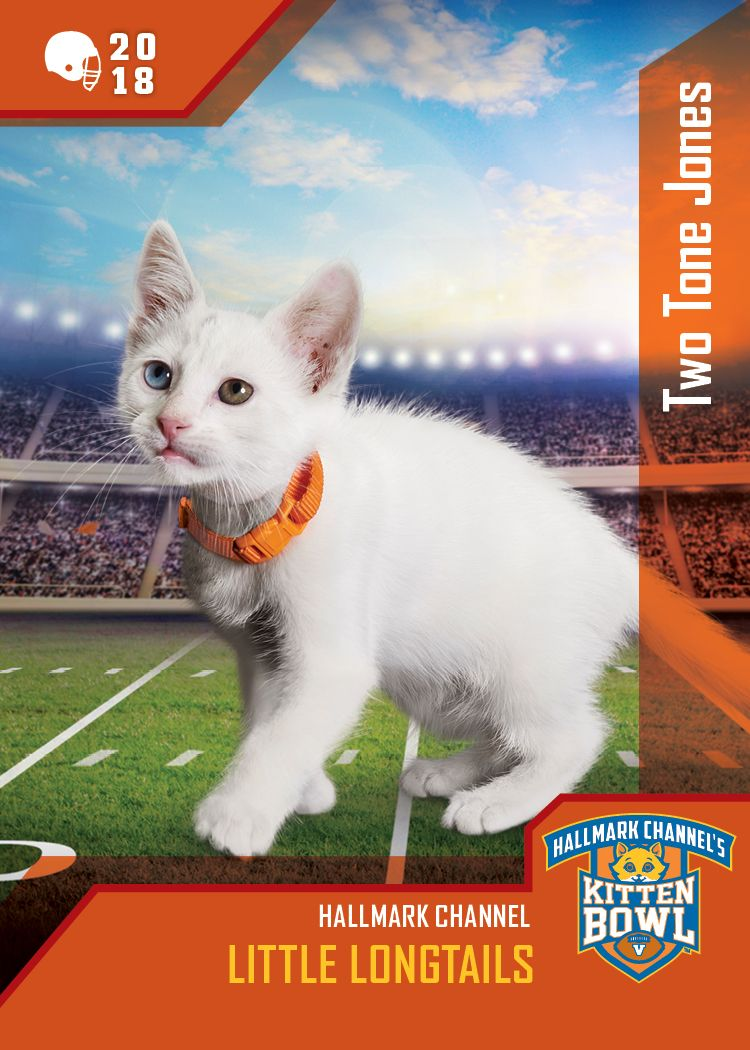 Kitten Bowl V Defensive Tickle Two Tone Jones Has A Special Feature Two Different Colored Eyes Watch Him Mesmerize His O Kitten Bowls Kitten Kittens Cutest