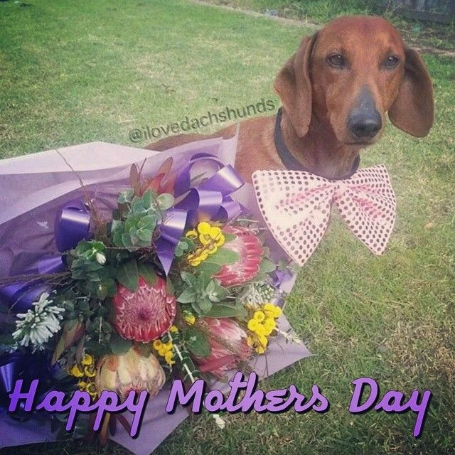 Happy Mothers Day to all the skin and fur mummys out there ...