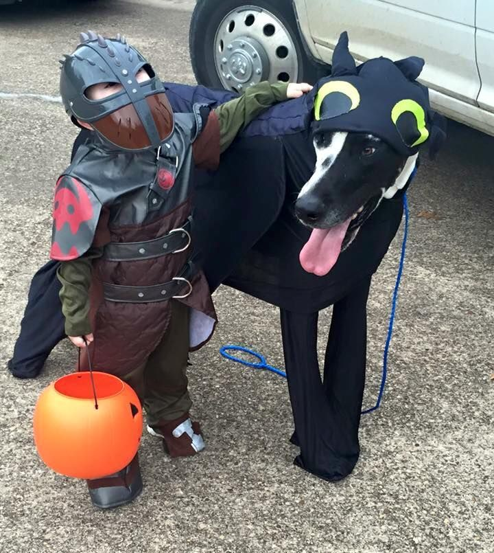 Toddler And Great Dane Halloween Dog Costume Hiccup And Toothless
