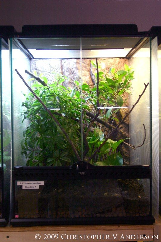 A Typical Fully Planted 18 X18 X24 Exo Terra Glass Terrarium The