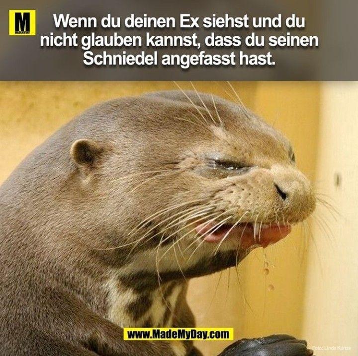 Photo of Omg xD – # schnappt sich das Vertrauenelustighumor #humorlustigbilder #humoristischlustig #lustig …