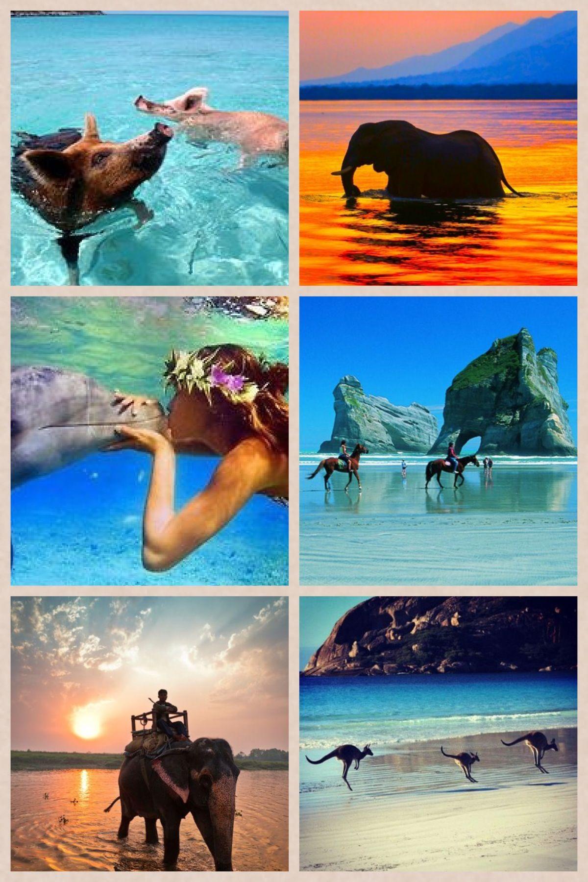 Swim with ALL the animals Animals, Fish pet, Pets