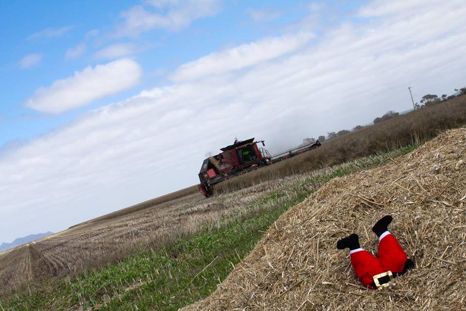 Image courtesy of: Ravensthorpe Agricultural Initiative Network