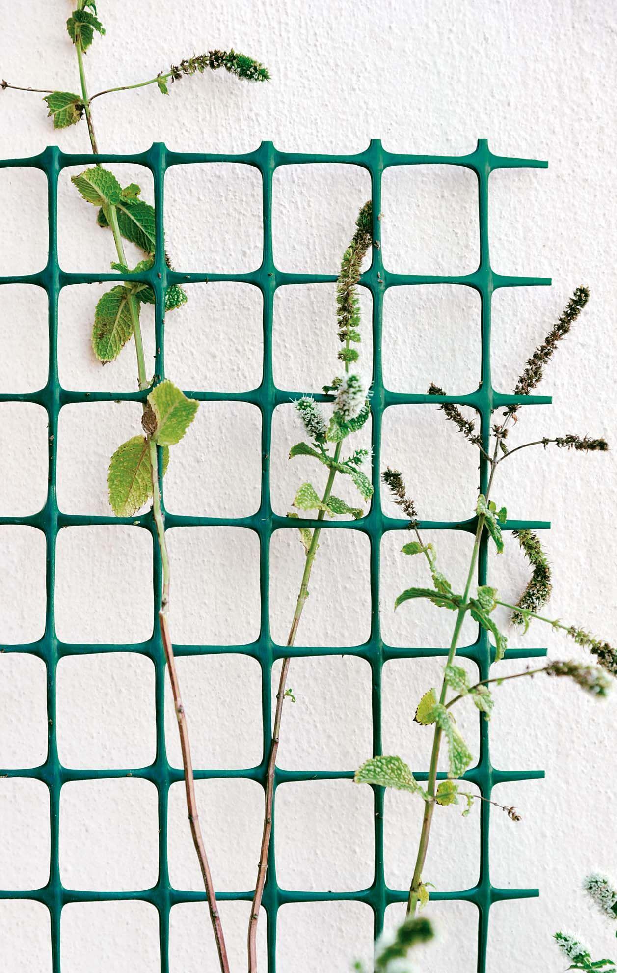 Rete Plastica Per Giardino.Rete In Plastica Ideale Per Recintare Il Giardino O Da Usare Come