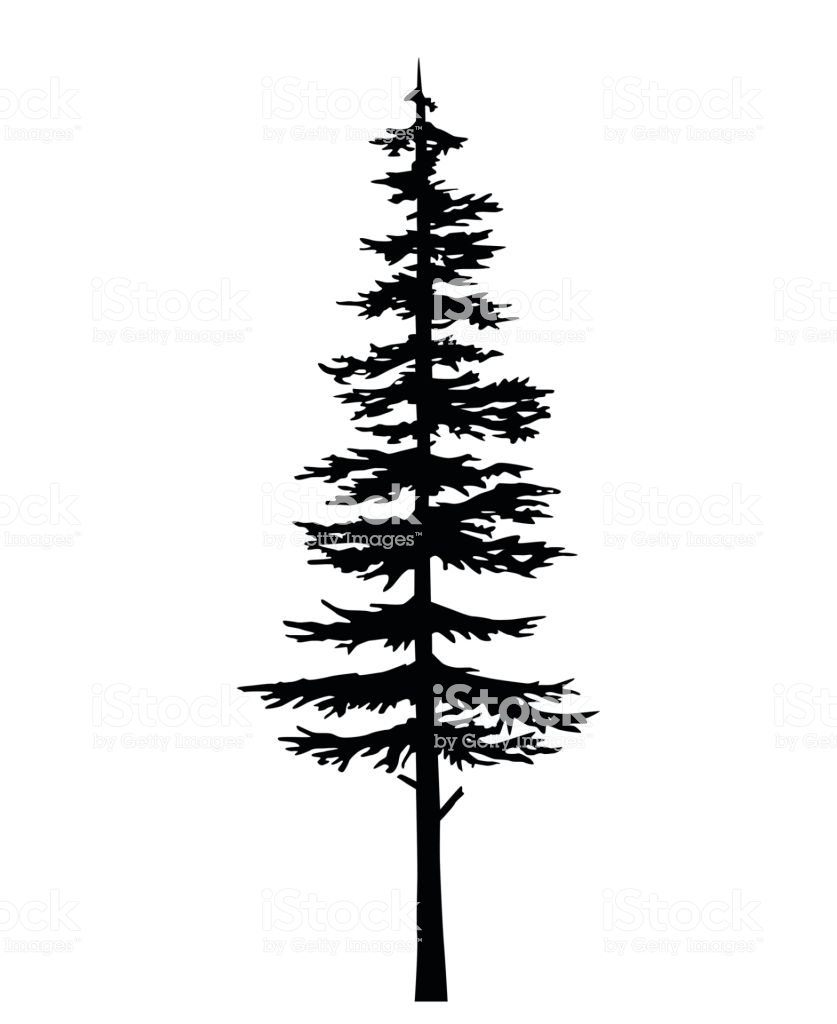 Vector isolated silhouette of a coniferous tree. Can be